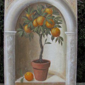 Petit oranger dans une niche