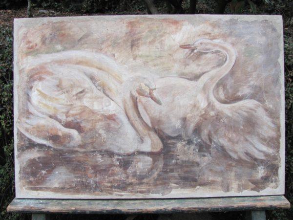 Cygnes blancs